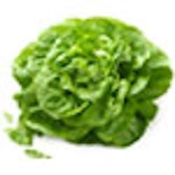Green Leaf Lettuce Main Image