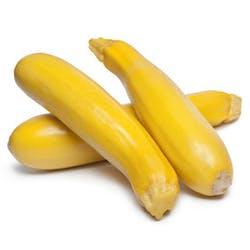 Squash- Yellow (FL) Main Image