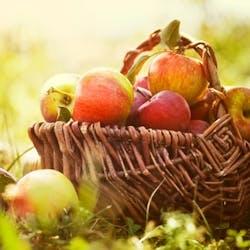 Organic Fruit Shop Category Image