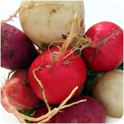 Organic Vegetables Shop Category Image