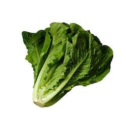 Lettuce- Romaine (FL) Main Image