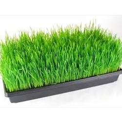 Micro Greens Shop Category Image