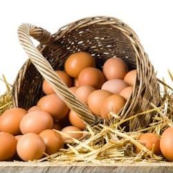 Eggs Shop Category Image