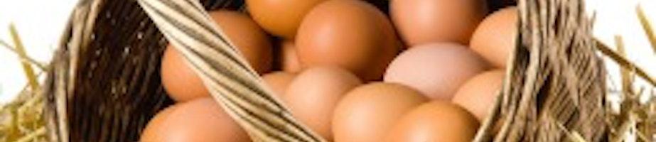 Eggs Shop Category