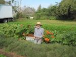 The Growing Garden