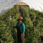 Slanted Sun Farm