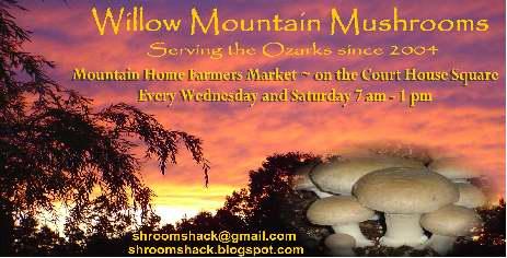 Willow Mountain Mushrooms | Farm 2 Counter