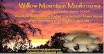 Willow Mountain Mushrooms
