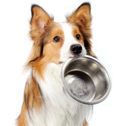 Dog Food Shop Category Image