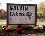 Galvin Farm