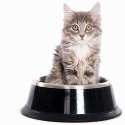 The Cat Shop Shop Category Image