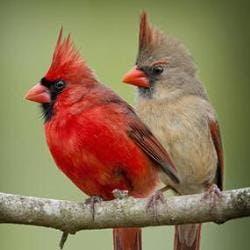 The Wild Bird Shop Shop Category Image