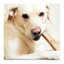 Dog Chews Shop Category Image