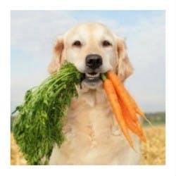 Dog Health Shop Category Image